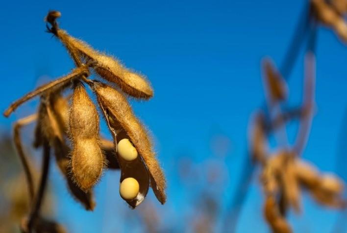 Soja: preço médio sobe até 29% no 1º semestre e garante resultado positivo para produtor