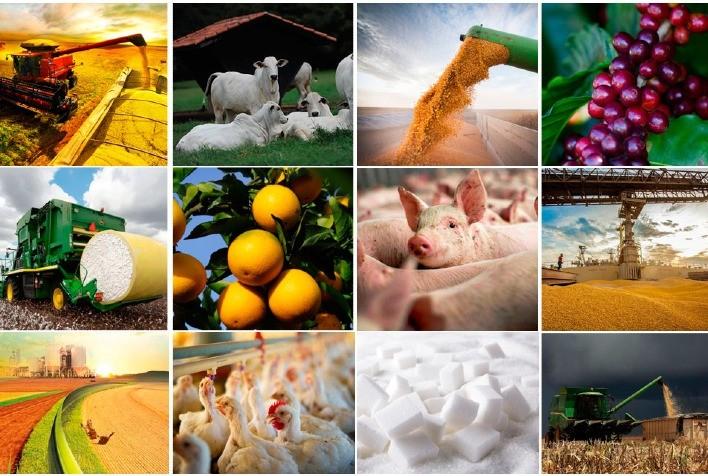 Agro em Dados de setembro destaca a recuperação de preços no mercado de leite, safra de grãos e exportações do agro em GO