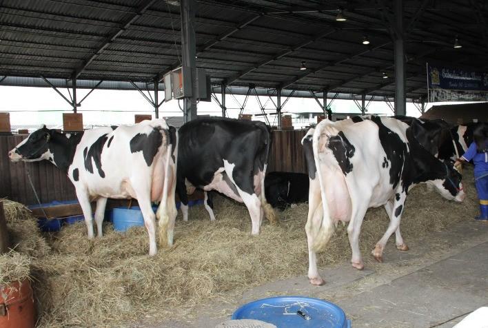Conforto do produtor também está ligado à maior produção de leite