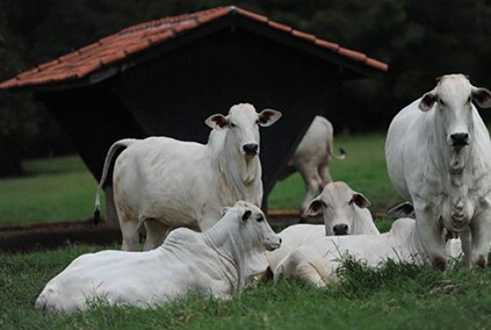 Influência de fatores emocionais gerados pela pandemia sobre a comercialização pecuária