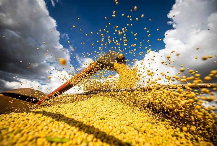 Brasil colhe a maior safra de soja da história, confirma SAFRAS