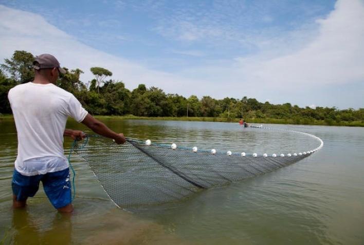 Piscicultura em água doce é mais acessível e sustentável