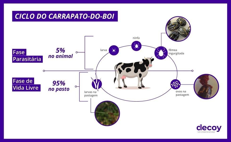 controle-biologico-infograf