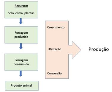 pasto-info-graf